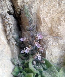 געדת הסלעים
