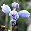 כדן קטן-פרחים