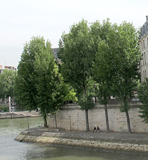 Black poplar, Downy black poplar, Willow poplar