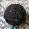 אגוז שחור