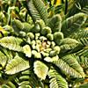 Astragalus dactylocarpus